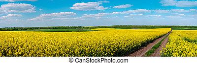terre, champs, oilseed, par, route, fleur, colza