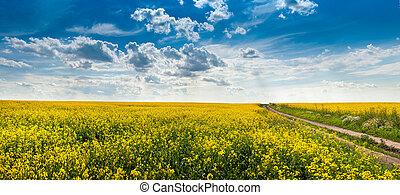 terre, champs, sous, ciel, colza, cloudly, fleur, route