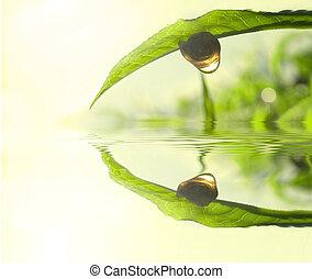 thé, concept, feuille, vert, photo