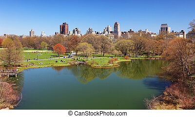 tortue, parc central, -, york, étang, nouveau