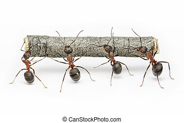 travail, fourmis, collaboration, bûche, équipe