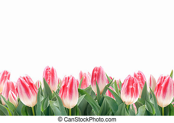 tulipes, fleurs, herbe, vert, printemps