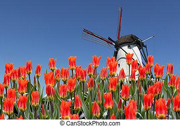 tulipes, moulin, paysage, hollandais