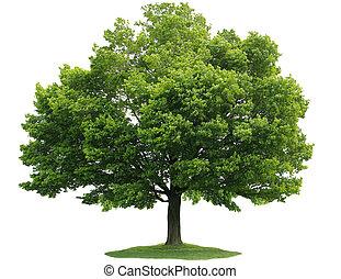 unique, arbre