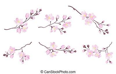 vecteur, fleurs, cerise, fleurir, branches, tendre, fleur, rose, ensemble