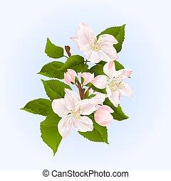 vecteur, fleurs, pommier, branche, bourgeons