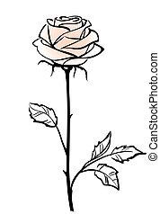 vecteur, fond, rose, rose, beau, isolé, unique, fleur blanche, illustration