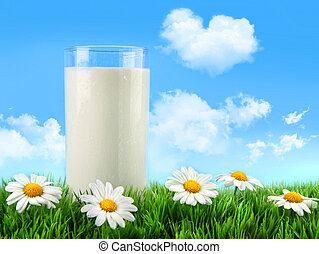 verre, herbe, pâquerettes, lait