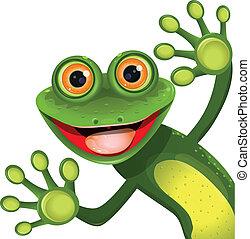 vert, joyeux, grenouille