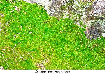 vert, mousse