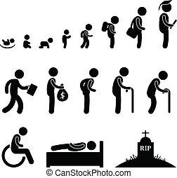 vie, vieux, humain, étudiant, enfant, bébé