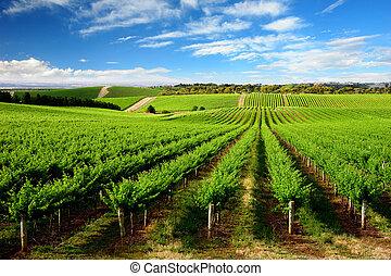 vignoble, arbre, colline, une