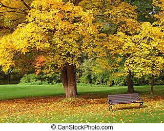 ville parc, automne